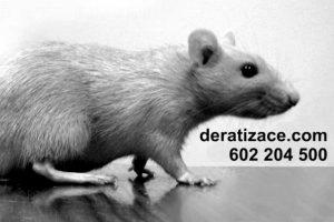 Potkan deratizace ceník Praha
