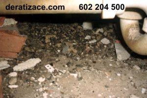 Hubení potkanů jak zlikvidovat hubení deratizace ceník Praha
